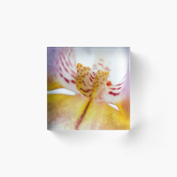 Spotted Orchid Acrylic Block