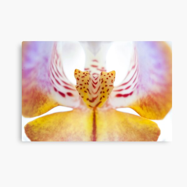 Spotted Orchid's Center Canvas Print