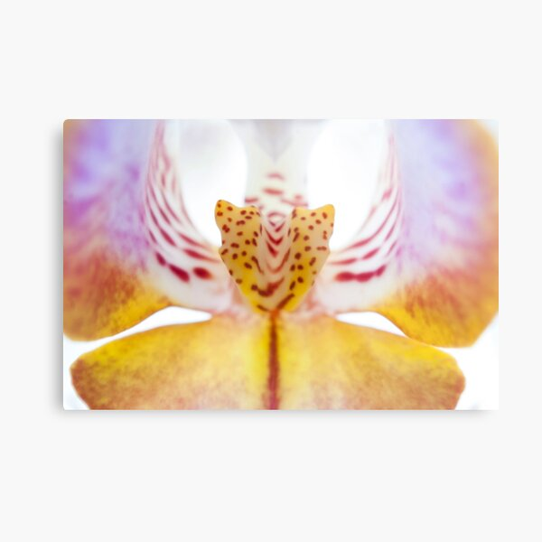 Spotted Orchid's Center Metal Print