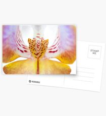 Spotted Orchid's Center Postcards