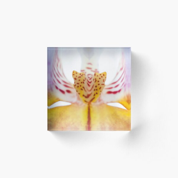 Spotted Orchid's Center Acrylic Block