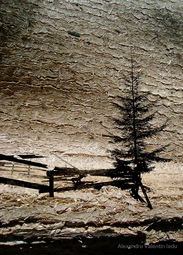 Winter on my view by Alexandru Valentin Iedu