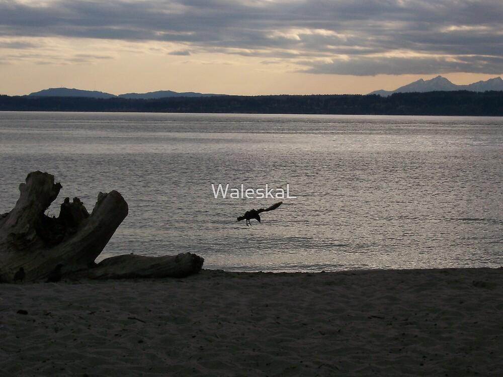 Sunset Raven Silhouette by WaleskaL