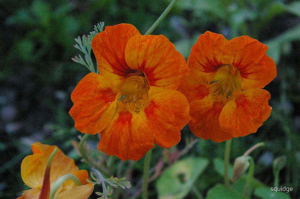 orange flower by squidge