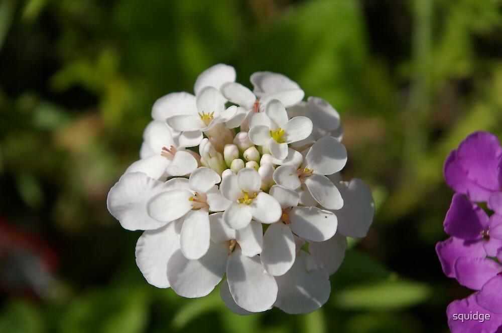 white flower by squidge