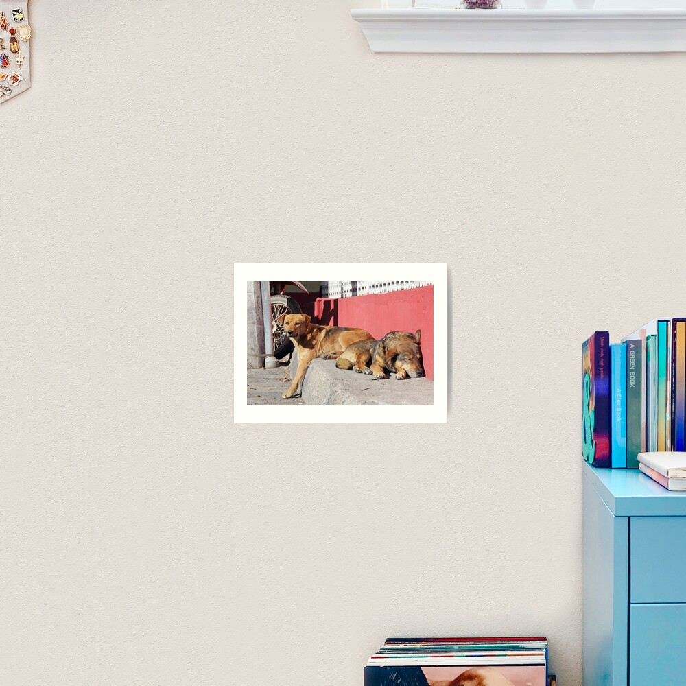 Two dogs relaxing on a city street, Guamote, Ecuador Art Print