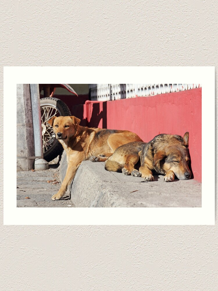 Alternate view of Two dogs relaxing on a city street, Guamote, Ecuador Art Print