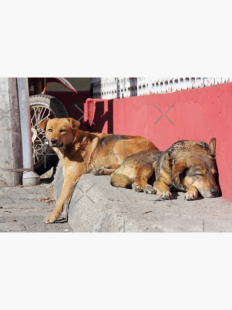 Two dogs relaxing on a city street, Guamote, Ecuador by kpander