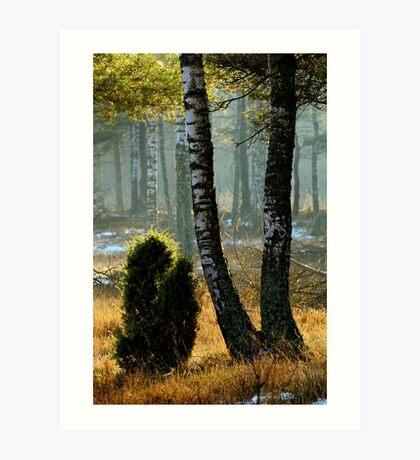 In winter sunshine Art Print