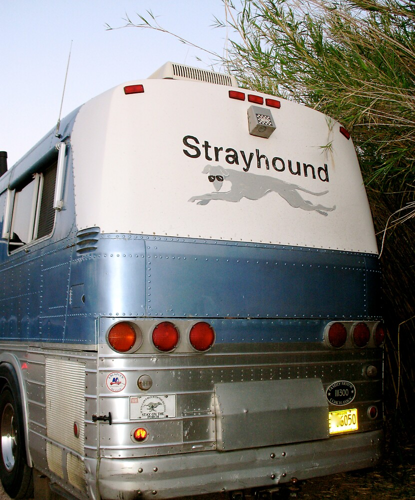 Go Strayhound by doctorharrison