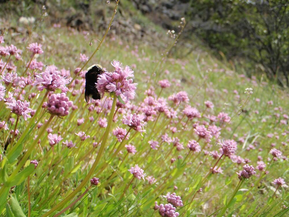 Busy Bee by heathernicole00