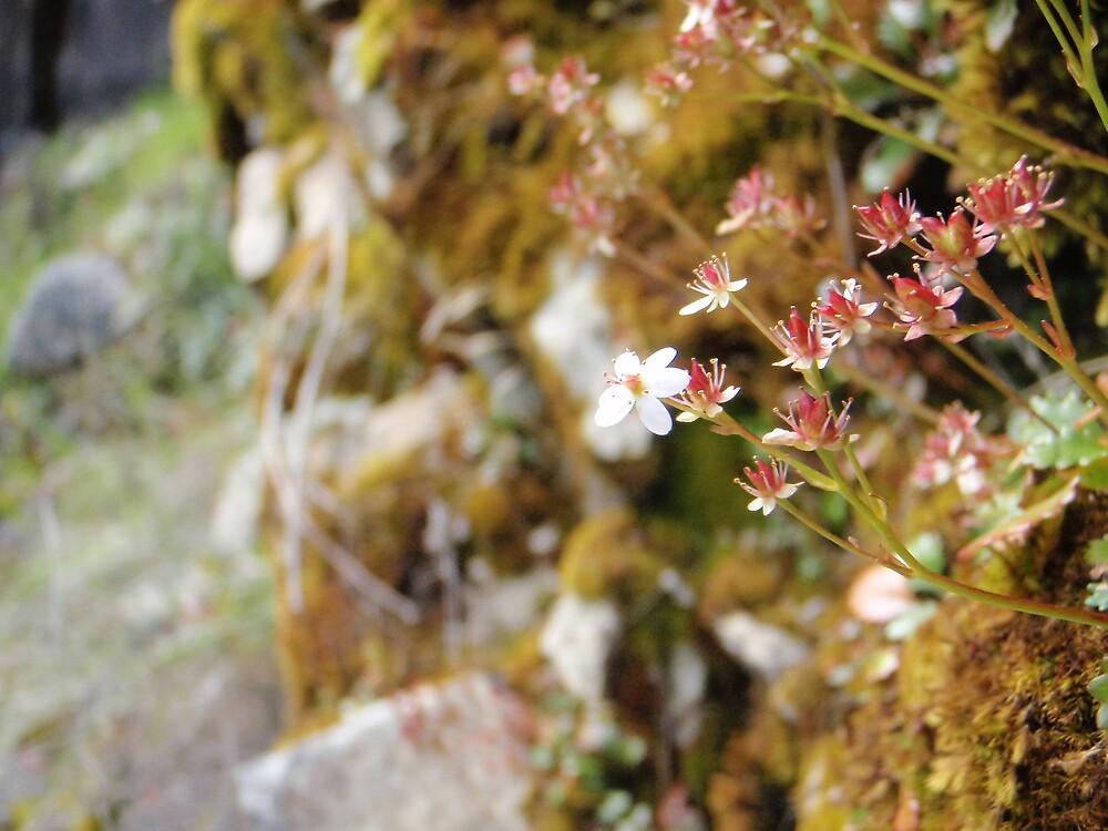 Cute Little Flowers by heathernicole00