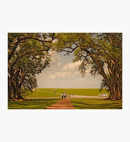 Oak Alley Plantation Photographic Print
