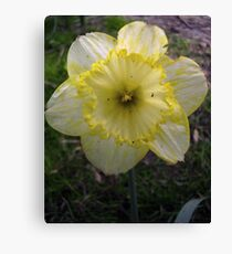 Yellow/White Mix Canvas Print