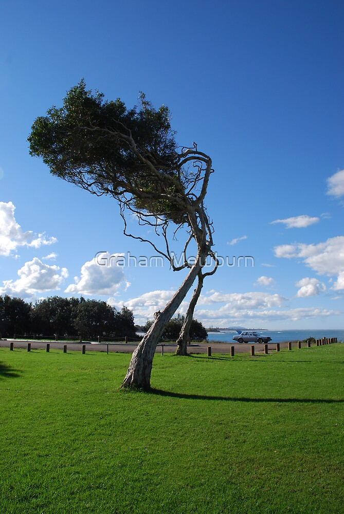 Saltwater Tree by Graham Mewburn