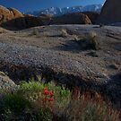 Flower in The Eastern Sierras by MattGranz