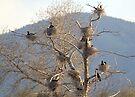 Cormorant Condos by Betsy  Seeton