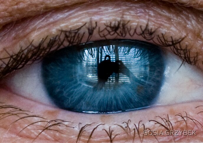 what has this eye view? by GOSIA GRZYBEK