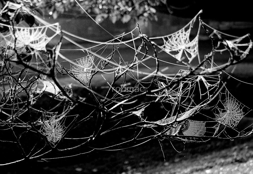 Webs by robmac