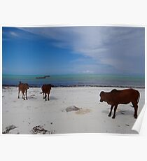 Cows On The Beach One - Zanzibar, Tanzania, Africa Poster