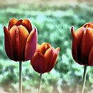 Tulips by G. David Chafin