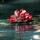Exquisite Water Flower by Lucinda Walter