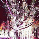 The tree by imajerseygirl