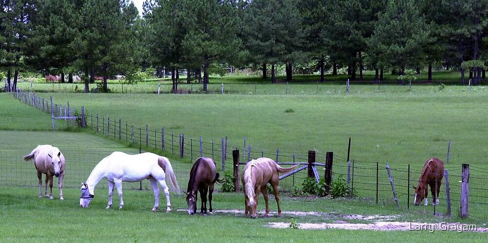 Georgia horses by Larry  Grayam