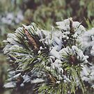 Winter in Crookwell. by Candy Jubb