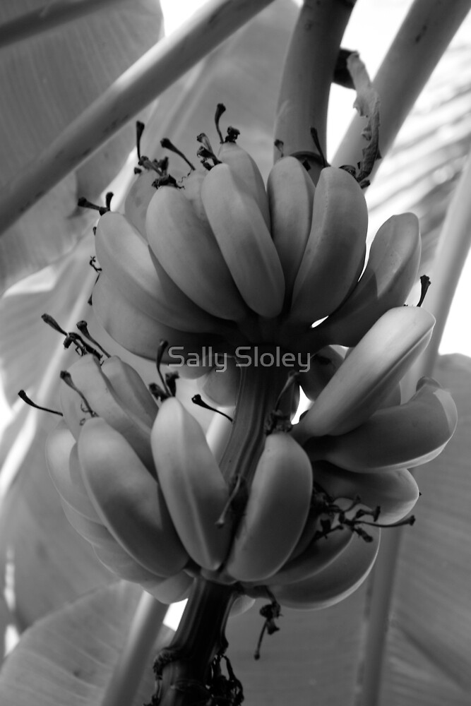 Bunch of bananas by Sally Sloley