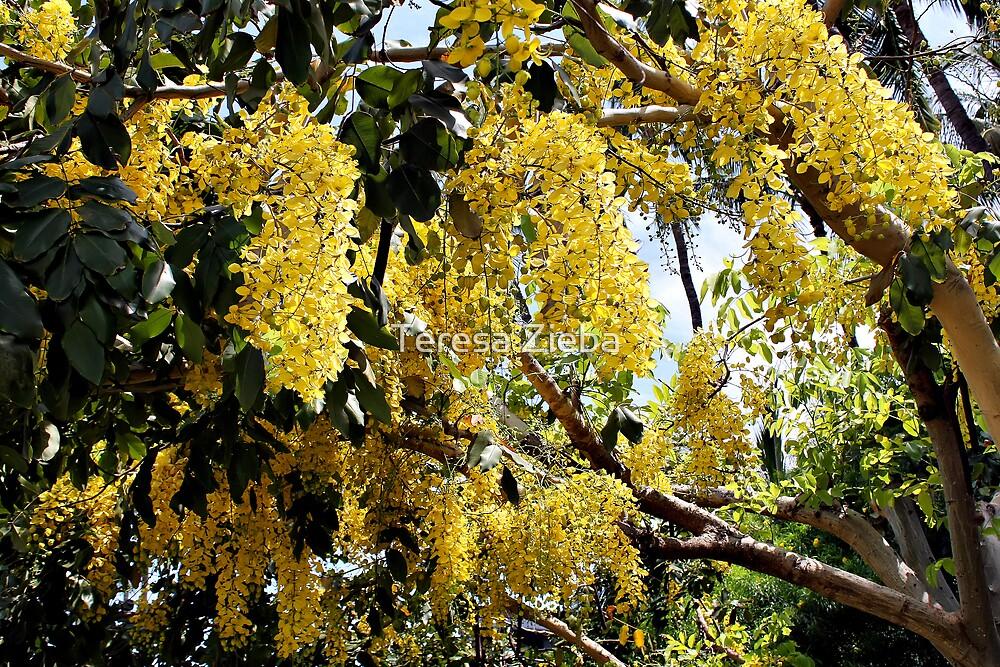 Golden Shower Tree by Teresa Zieba
