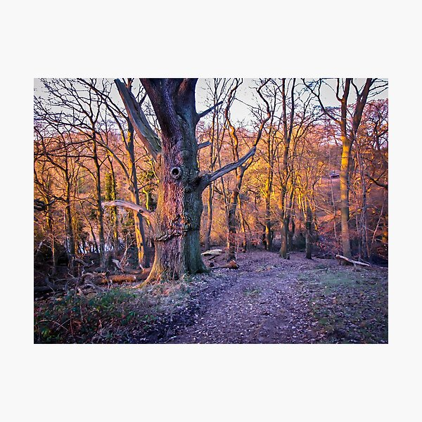 Wood in the sunset Photographic Print