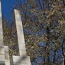 Branches and Blocks by Barbara Gerstner