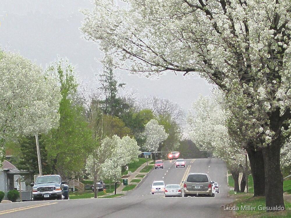 Blooming Trees In The neighborhood by Linda Miller Gesualdo