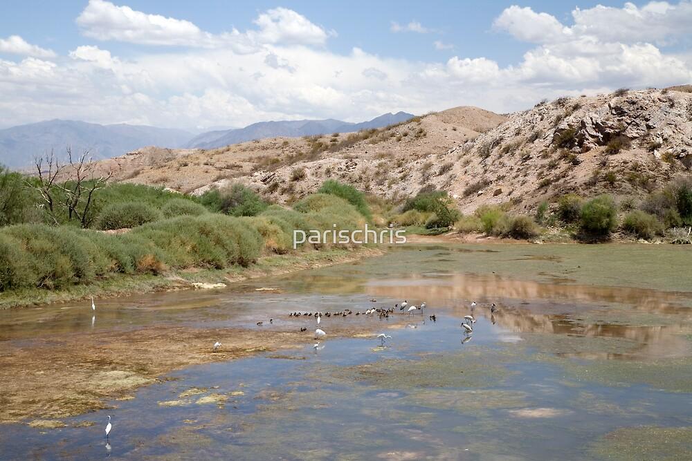 Andean wetlands, North West Argentina by parischris
