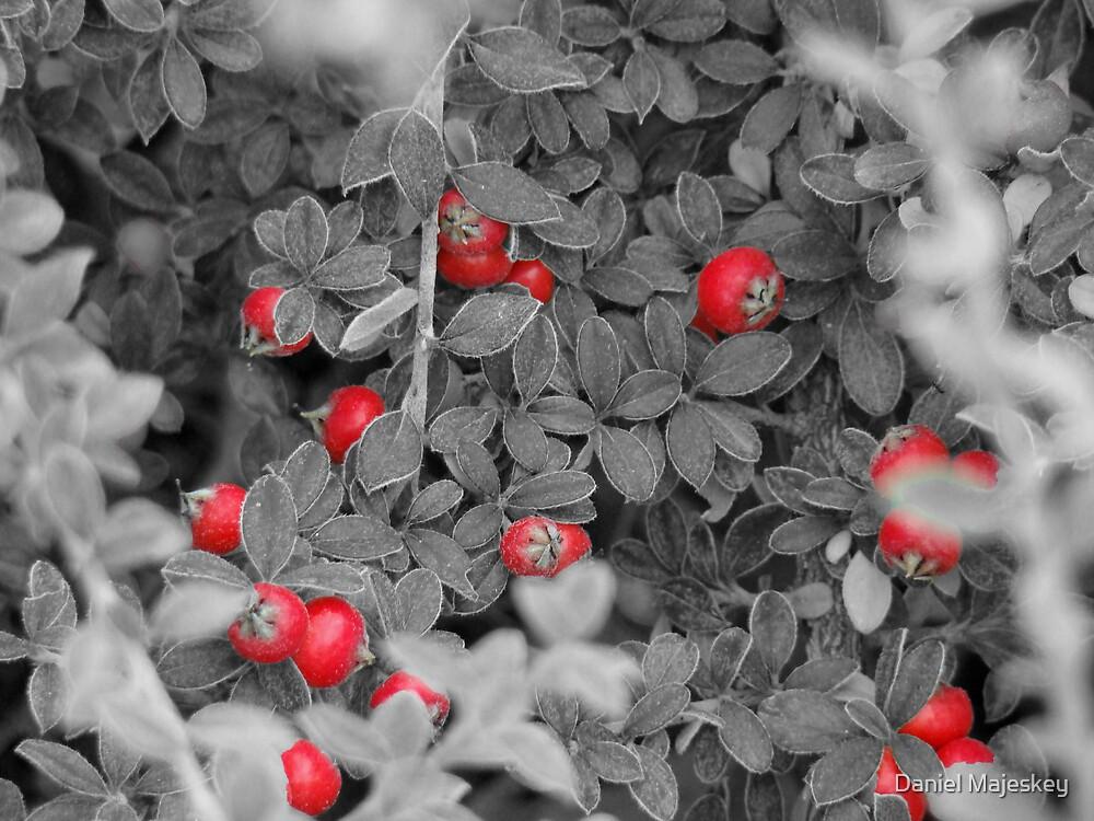 Red Garden by Daniel Majeskey