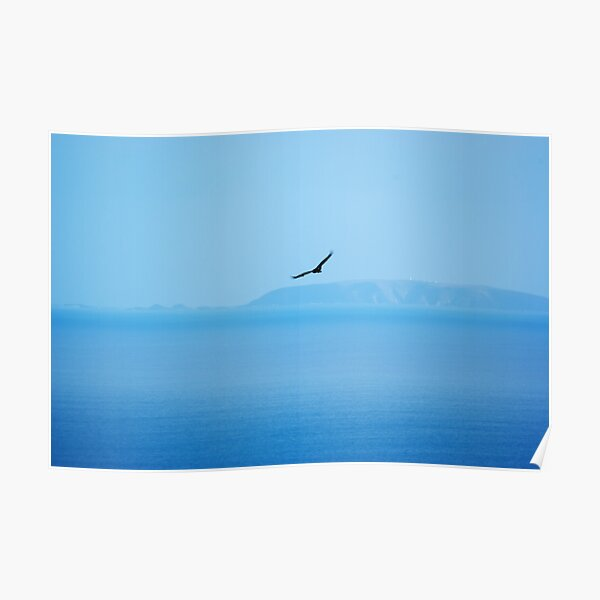 Wedge Tailed Eagle Over the Ocean Poster