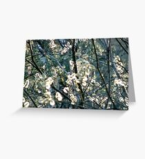 Salix Blossoms and Light Greeting Card
