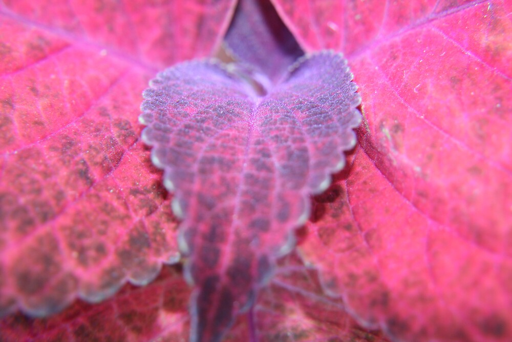 Red and purple close up  by faulsey