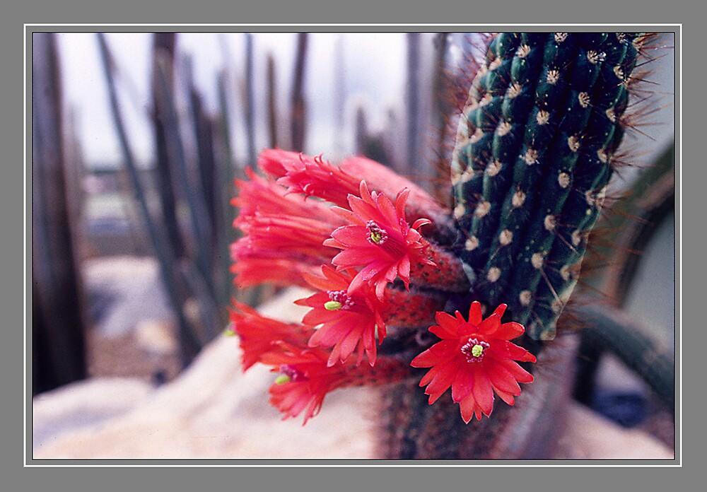 Cactus by satwant