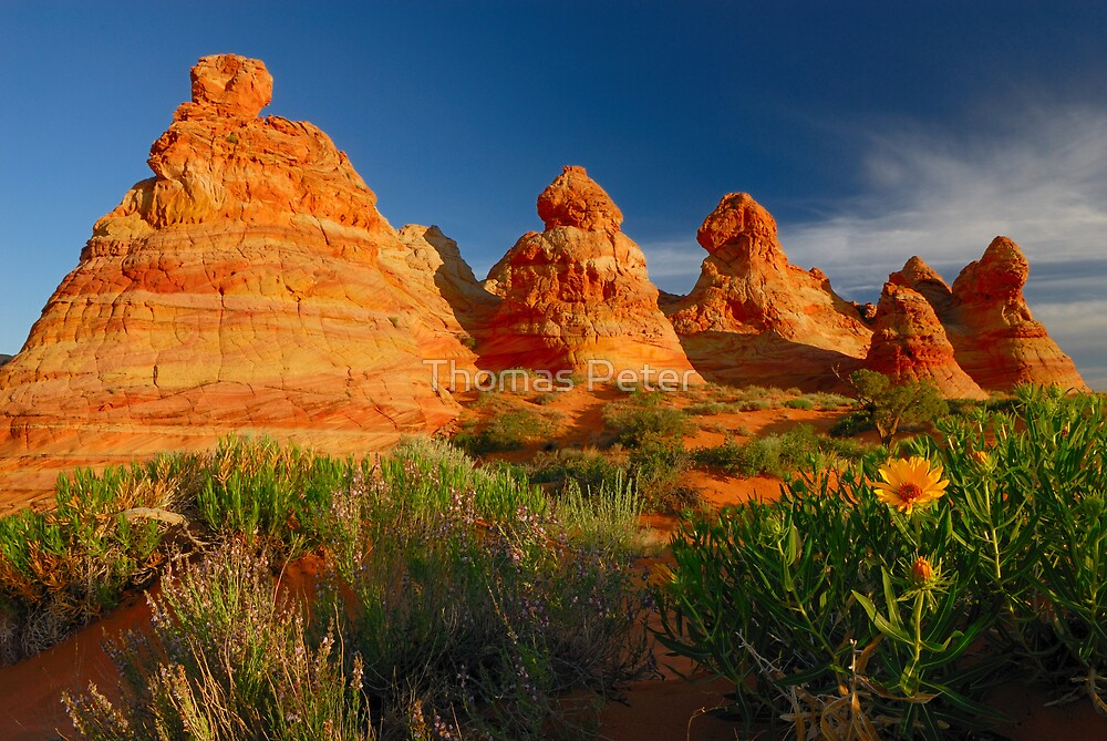 South Coyote Buttes by Thomas Peter