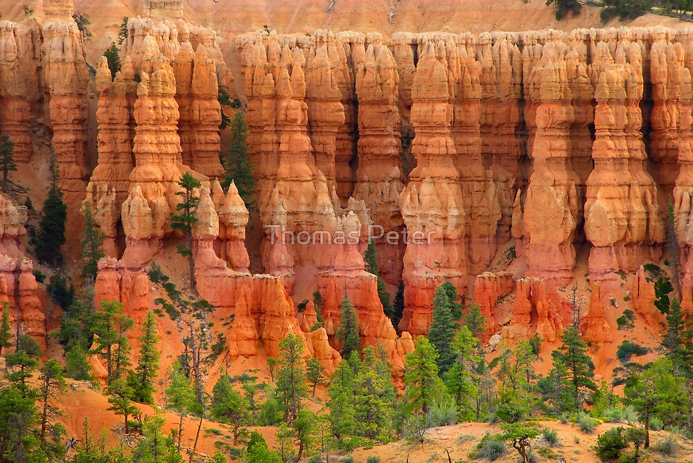 Pillars of the Earth by Thomas Peter