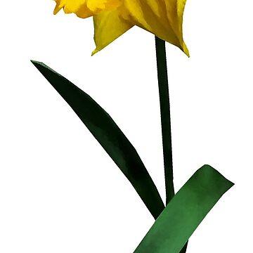 Daffodil Waving Hi by SudaP0408