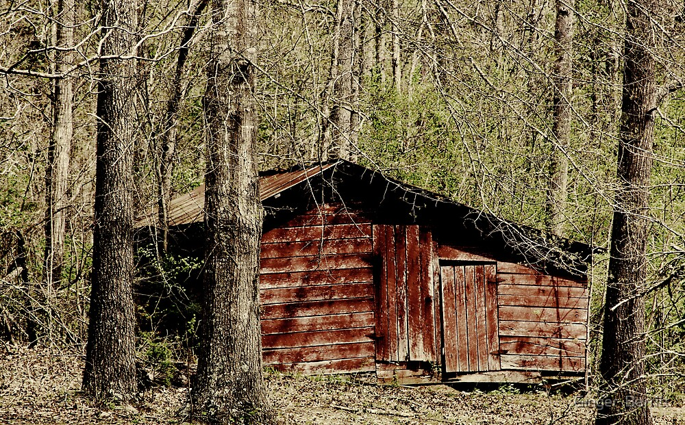 Little Country Red Shed by Ginger  Barritt