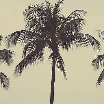 Palm tree by gailgriggs