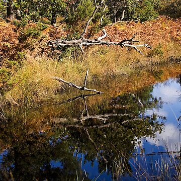 Reflected Nature by pursuits