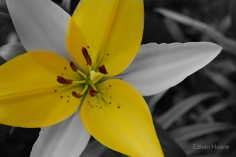 Yellow flower by Ethan Hoare