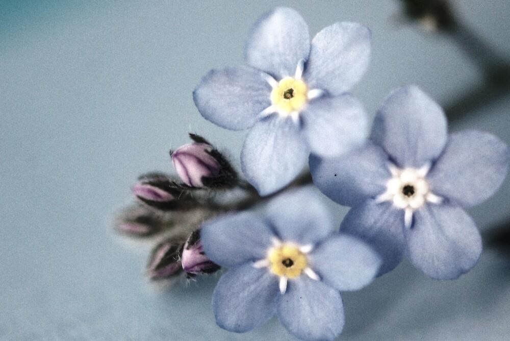 little blue by sapaho