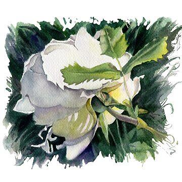 White Dog rose by lamarmarina