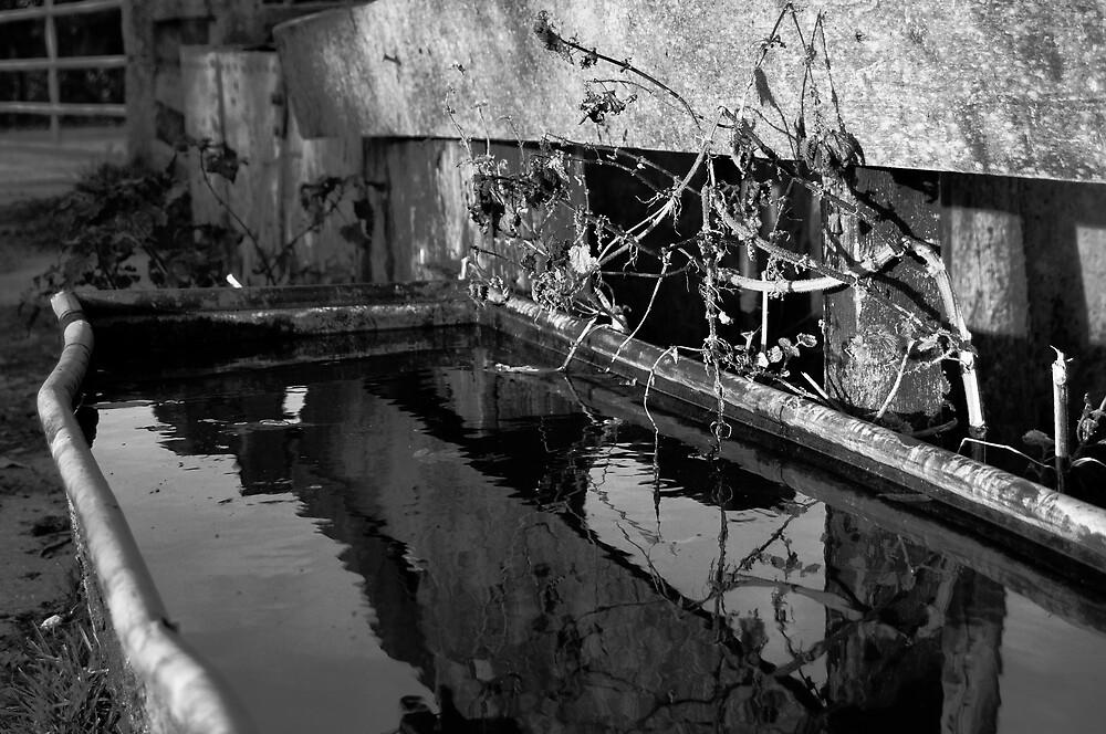 Old Trough by Derek McMorrine